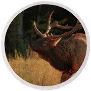 Autumn Elk In Cataloochee Valley Textured Round Beach Towel