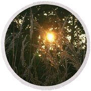 Autumn Grasses In The Morning Round Beach Towel