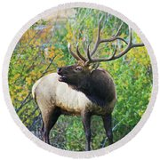 Autumn In Estes Park Round Beach Towel
