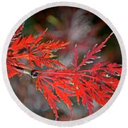 Autumn Japanese Maple Round Beach Towel