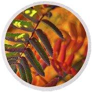 Autumn Leaves - Patagonia Round Beach Towel
