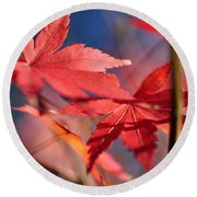 Autumn Maple Round Beach Towel by Kaye Menner