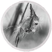 Autumn Milkweed 9 - Bw Round Beach Towel