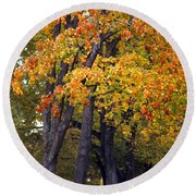 Autumn Trees In Park Round Beach Towel