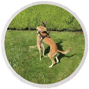 Ava The Saluki And Finly The Lurcher Round Beach Towel
