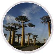 Avenue Des Baobabs Round Beach Towel