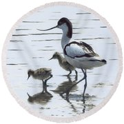 Avocet And Chicks Round Beach Towel