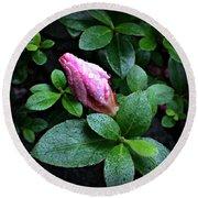 Awakening - Flower Bud In The Rain Round Beach Towel
