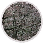 Awash In Cherry Blossoms Round Beach Towel