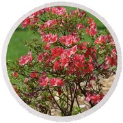 Azalea Bush 2  Round Beach Towel