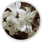 Azalea Flowers In Sepia Brown Round Beach Towel