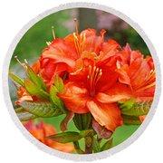 Azaleas Art Home Decor 14 Orange Azalea Flowers Art Prints Greeting Cards Round Beach Towel