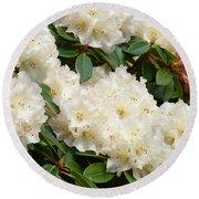 Azaleas Rhodies Landscape White Pink Rhododendrum Flowers 8 Giclee Art Prints Baslee Troutman Round Beach Towel