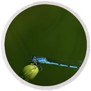 Azure Damselfly-coenagrion Puella Round Beach Towel