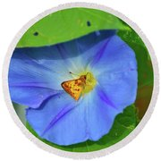 Azure Morning Glory Round Beach Towel
