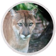 Babcock Wilderness Ranch - Oceola The Panther Gazing Round Beach Towel