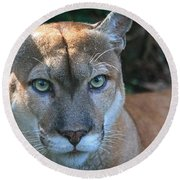 Babcock Wilderness Ranch - Oceola The Panther Pleasantly Peering Round Beach Towel