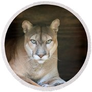 Babcock Wilderness Ranch - Portrait Of Oceola The Panther Round Beach Towel