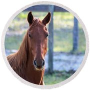 Babcock Wilderness Ranch - Red Horse Portait Round Beach Towel