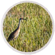 Babcock Wilderness Ranch - Sandhill Crane Round Beach Towel