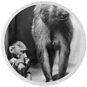Baboon Round Beach Towel
