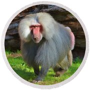 Baboon Stalking Round Beach Towel