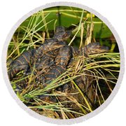 Baby Alligators Round Beach Towel