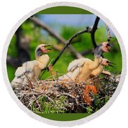 Baby Anhinga Chicks Round Beach Towel