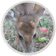 Baby Backyard Button Buck Round Beach Towel