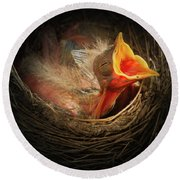 Baby Bird In The Nest With Mouth Open Round Beach Towel