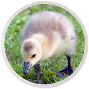 Baby Canada Goose Round Beach Towel