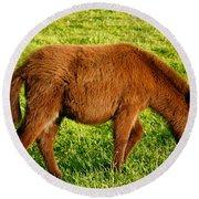 Baby Donkey Round Beach Towel