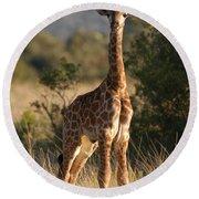 Baby Giraffe Round Beach Towel