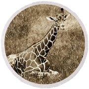 Baby Giraffe In Grasses Round Beach Towel