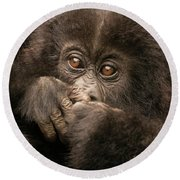 Baby Gorilla Close-up Hiding Mouth With Hands Round Beach Towel