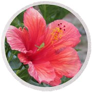 Baby Grasshopper On Hibiscus Flower Round Beach Towel