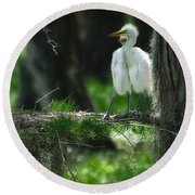 Baby Great Egrets With Nest Round Beach Towel