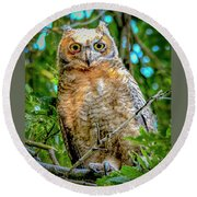 Baby Great Horned Owl Round Beach Towel