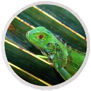 Baby Green Iguana Round Beach Towel