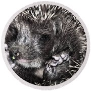 Baby Hedgehog Round Beach Towel
