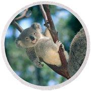 Baby Koala Bear Round Beach Towel