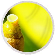 Baby Lemon On Tree Round Beach Towel by Ben and Raisa Gertsberg