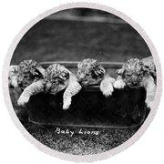 Baby Lions, C1900 Round Beach Towel