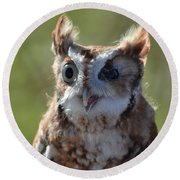 Cute Screetch Owl Round Beach Towel