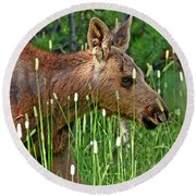 Baby Moose Round Beach Towel