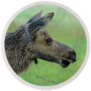 Baby Moose With Dew Round Beach Towel