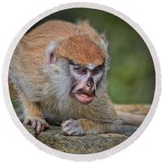 Baby Patas Monkey On Guard  Round Beach Towel