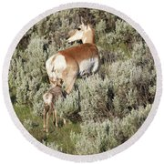 Baby Pronghorn Feeding Round Beach Towel