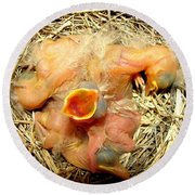 Baby Robins Newly Hatched Round Beach Towel