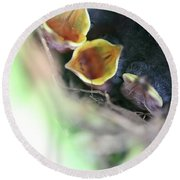 Baby Wrens In The Flowers 338 Round Beach Towel